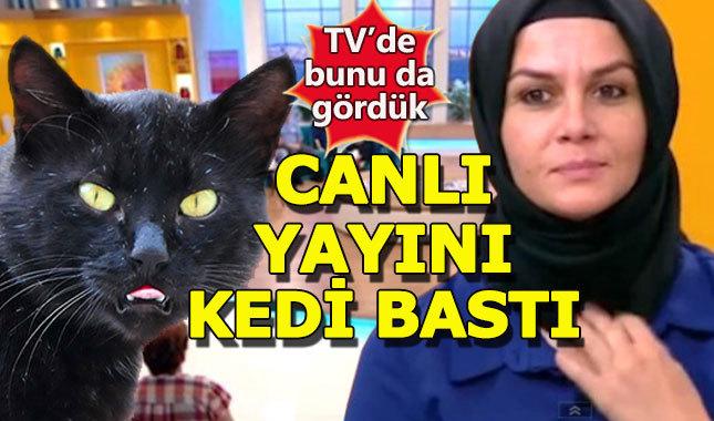 Canlı yayını kedi bastı