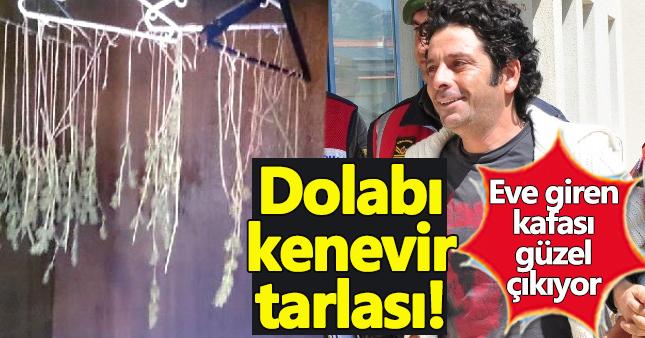 Selim Erdoğan'ın kenevir yuvasına dönmüş