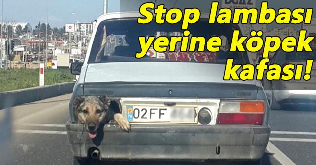 Seyir halinde stop lambası yerine köpeğin kafası