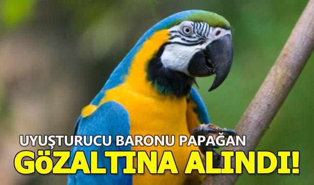 Uyuşturucu baronu papağan gözaltına alındı!
