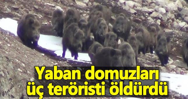 Yaban domuzları 3 DEAŞ teröristini öldürdü