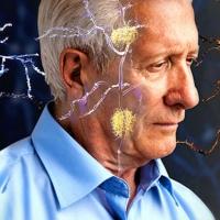Alzheimer tehlikesine karşı minyatür beyin ürettiler