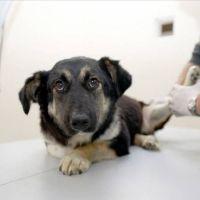 Ankara'da hayvanlar için ilk yardım eğitimi