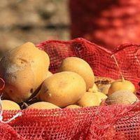 Aşırı artan patates fiyatlarına müdahale