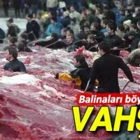 Avrupa'da balina vahşeti