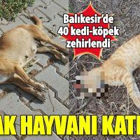 Balıkesir'de sokak hayvanı katliamı
