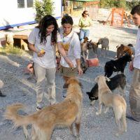 """""""Barınaktan Köpek Sahiplenme"""" projesi"""