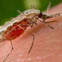 Dang Humması hastalığı (Dengue virüsü) nedir nasıl bulaşır belirtileri tedavi yöntemi nelerdir?