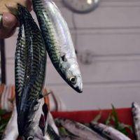 Somon diye biliyorduk! Omega 3 zengini balık başka çıktı