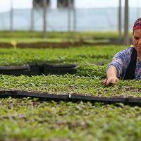 FAO'dan 4. girişimcilik ve kooperatif projesi