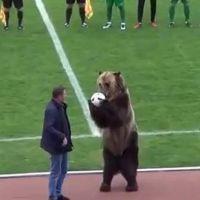 Futbol maçının başlama vuruşunu ayı yaptı