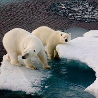 Gelecek yıl iklim değişikliği zorunlu ders olacak