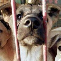 Güney Kore köpek etine hayır demeye hazırlanıyor