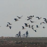 Hindistan'da 2000 ölü kuş bulundu