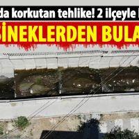İstanbul'da korkutan hastalık! Sivrisineklerden bulaşıyor