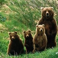 Kars'ın Sarıkamış ilçesindeki ormana kurulan fotokapana yansıyan doğal yaşam...