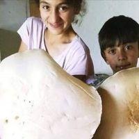 Kars'ta 3 kiloluk dev mantar keşfedildi