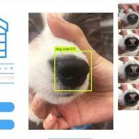Kayıp köpekleri bulmak için yapay zeka kullanılacak