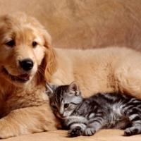 Kedi ve köpekleri yemek için öldürmek yasaklandı