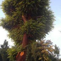 Kırşehir'de esnafa 2 ağaç için 50 bin TL ceza