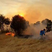 Mardin'de orman yangını! Kül oldu...
