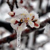 Meteorolojiden bazı illere zirai don uyarısı