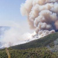 Muğla'da yine orman yangını