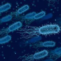 O bakteri kanser riskini arttırıyor!