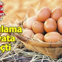 Organik yumurta sahtekarlığını bitirecek uygulama yürürlükte