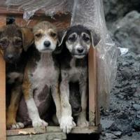 Rize'deki taş ocağı köpek barınağına dönüştürüldü