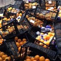 Rusya'ya gönderilen mandalinalar imha edildi