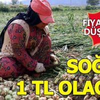 Soğan fiyatları düşecek