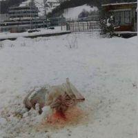 Srebrenitsa'daki anıt mezara çirkin saldırı