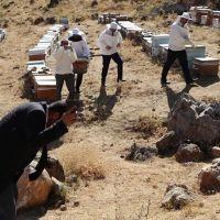 Şükür duası yapan arıcılara arılar saldırdı