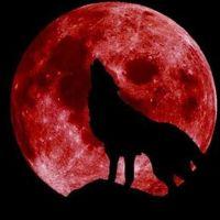 Süper Kanlı Kurt Ay nedir - Ay tutulması ne zaman saat kaçta olacak Türkiye'den izlenebilecek mi?