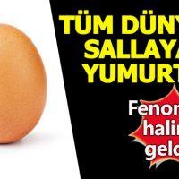 World record egg instagram profile - Instagram yumurta beğeni rekoru
