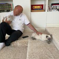 Bakan Soylu'dan Dünya Kediler Günü paylaşımı