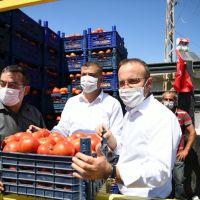 AK Parti Grup Başkanvekili Turan, domates hasat şenliğine katıldı:
