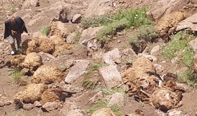 500 koyun neden uçurumdan atladı? Sürü psikolojisi nedir?