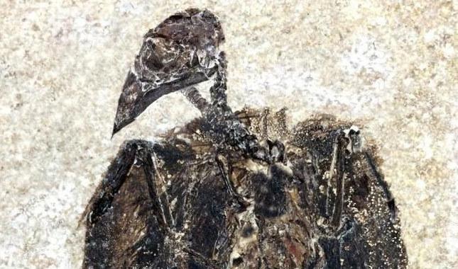 52 milyon yıllık fosil bulundu