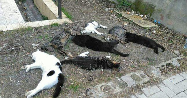 Antalya'da vahşet! Sokak kedilerini zehirlediler