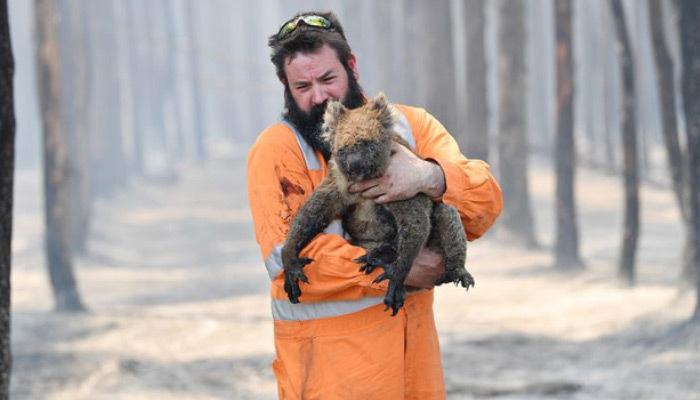 Avustralya'daki yangınlar canlı türlerini tehlikeye soktu