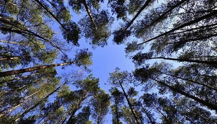 BOTAŞ, bir milyon 200 bin metrekarelik alanı ağaçlandıracak