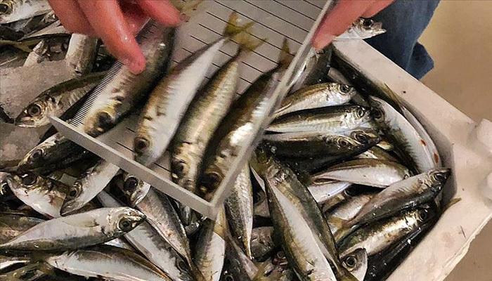 Boy yasağına uymayan balıkçılara ağır ceza