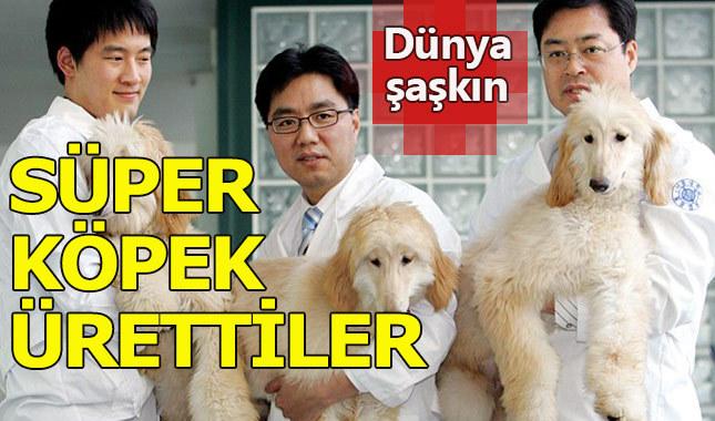 Çinli bilim adamları köpek klonlamayı başardı