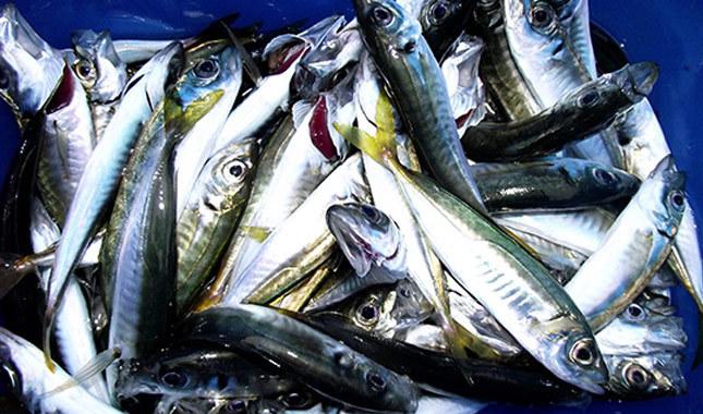 Denizlerdeki balık bolluğu fiyatlara yansıdı