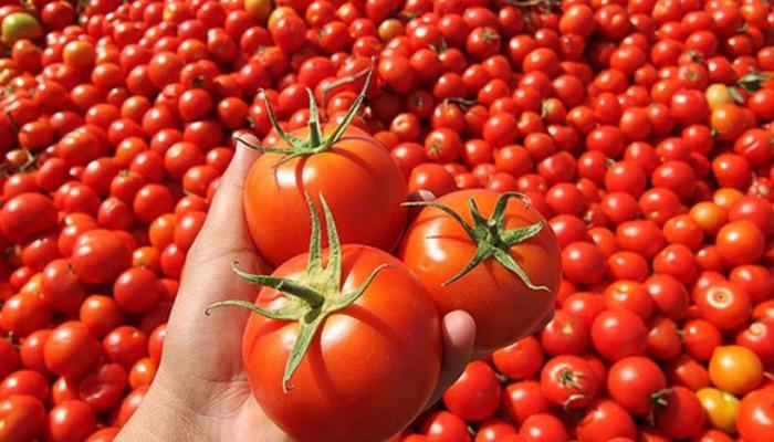 Domates meyve mi sebze mi | Sebze bilinen meyveler