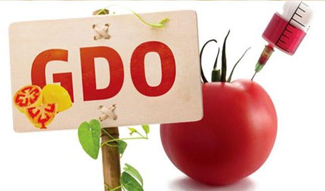 GDO nedir? Zararları nelerdir? Hangi ürünlerde GDO var?