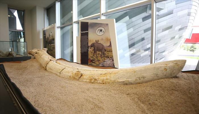 Kayseri'deki fosiller yeni türün olabilir
