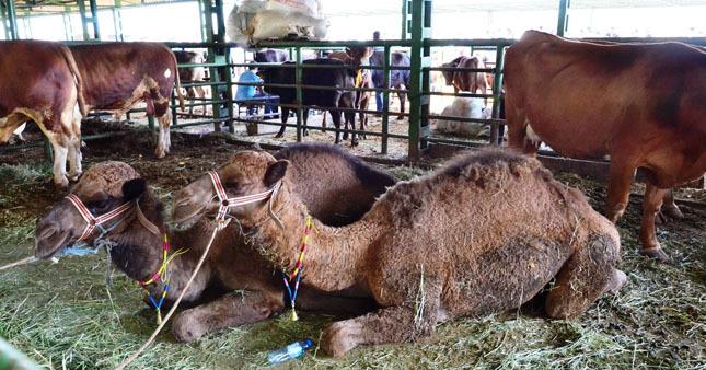 Fiyatları 'Yok deve' dedirtti